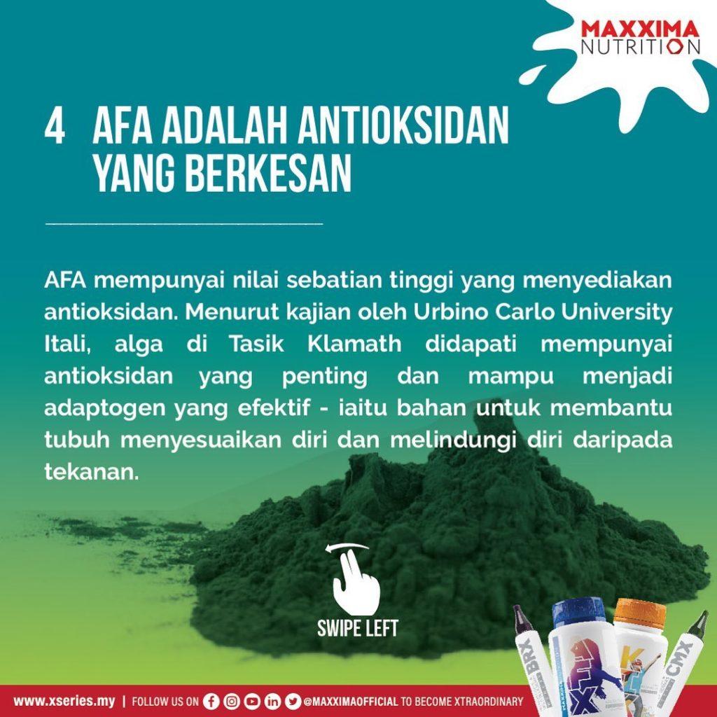 AFA Antioksidan